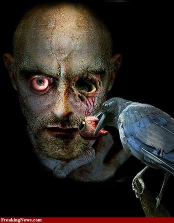 Black-crow-53241.jpg