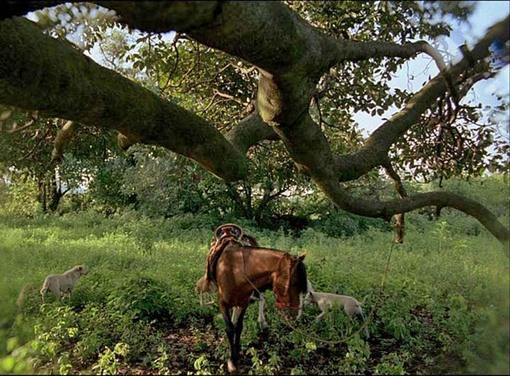 luxhorse.jpg