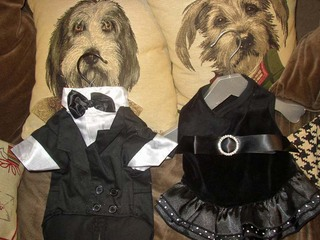 dogoutfits.jpg