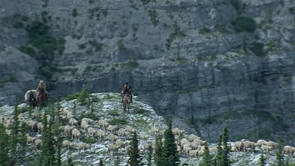 brokeback_sheep_mountains_cliff.jpg