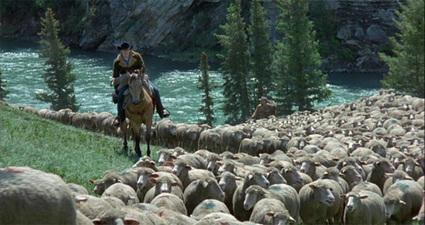 brokeback_sheep_river.jpg