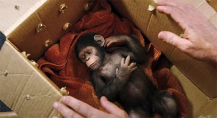 Rise of the Planet of the Apes_baby_chimp.jpg