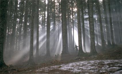 Conformist_trees_atmosphere.jpg