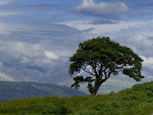 Solitary Tree e.jpg