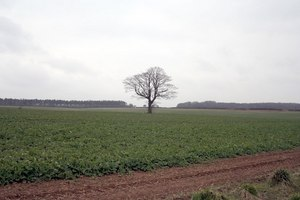 solitary-tree-in-a-field-135778.jpg