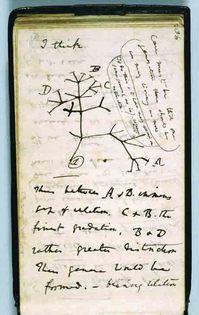4_Darwin Tree B 36.jpg