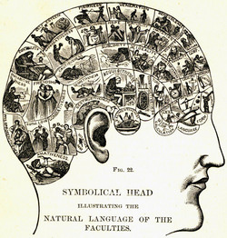 phrenologicalchart.jpg