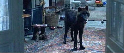 ctalewolf.jpg