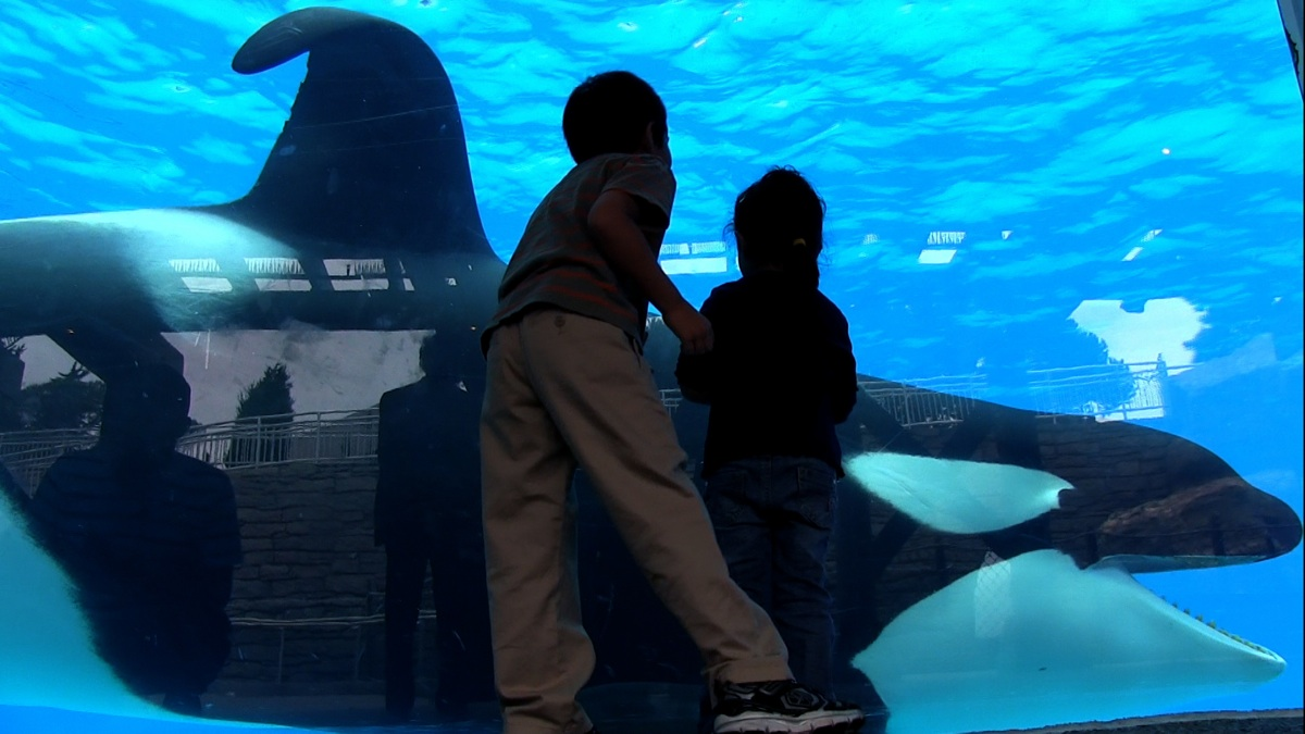 an orca