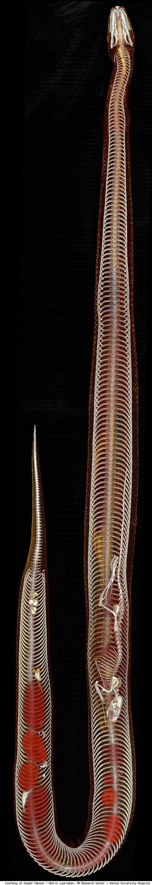 python-panoram-584-1278600808.jpg