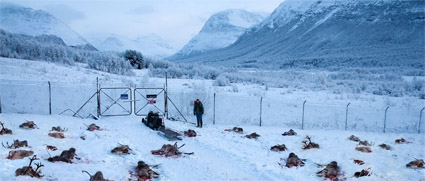 rare_exports_dead_reindeer.jpg