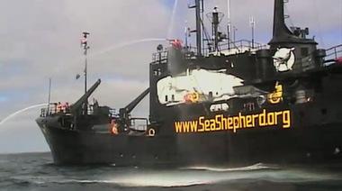 sea-shepard.jpg