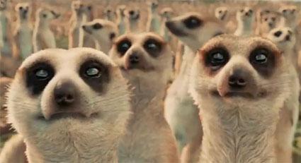 life-of-pi_meerkats.jpg