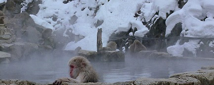 baraka_snow_monkey2.jpg