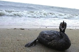 dying shore bird.jpg