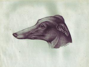 Dog,jpg