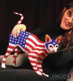 nice-american-flag-cat1239739764.jpg
