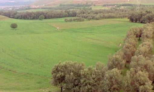 olivetrees.jpg
