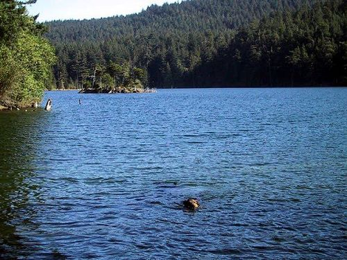 swimfran.jpg