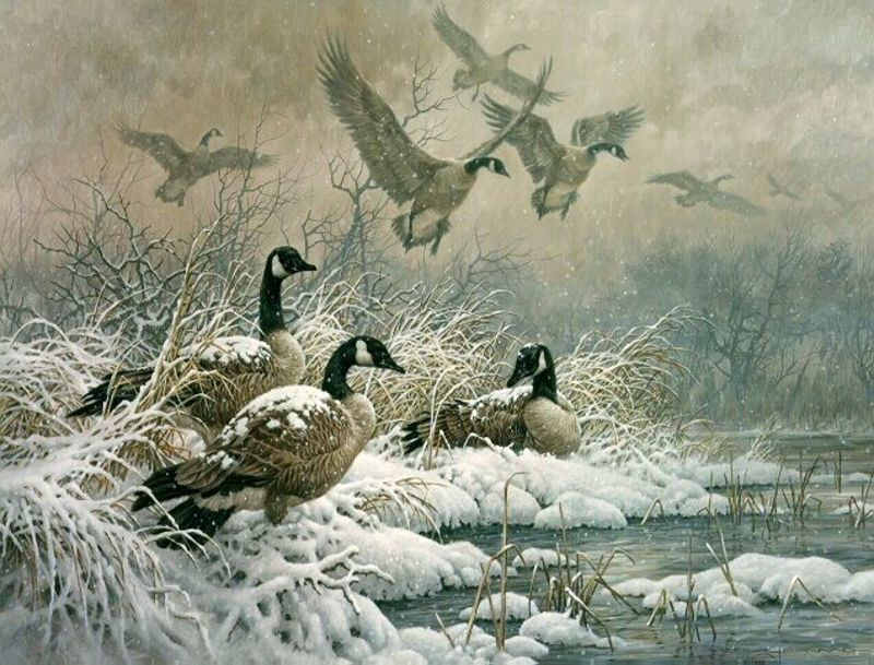 Primary wild geese