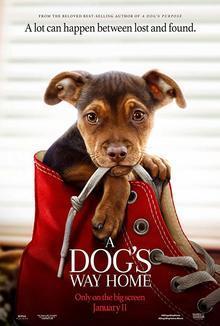 Widget dogs poster