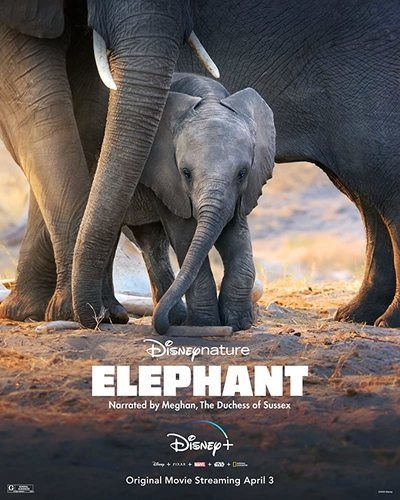 Elephant movie poster
