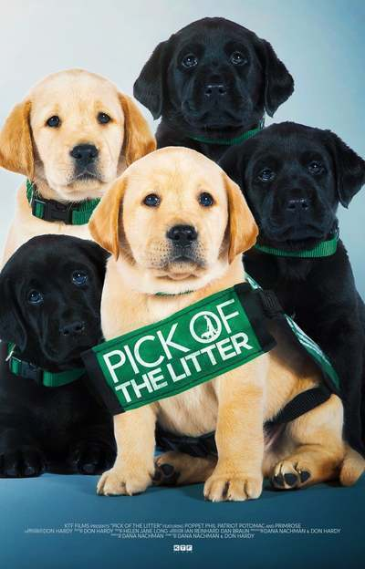 Pick of the Litter movie poster