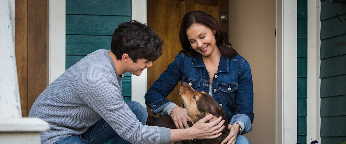 A Dog S Way Home Movie Review 2019 Roger Ebert,Country Cottage Cottage Style Decor Ideas