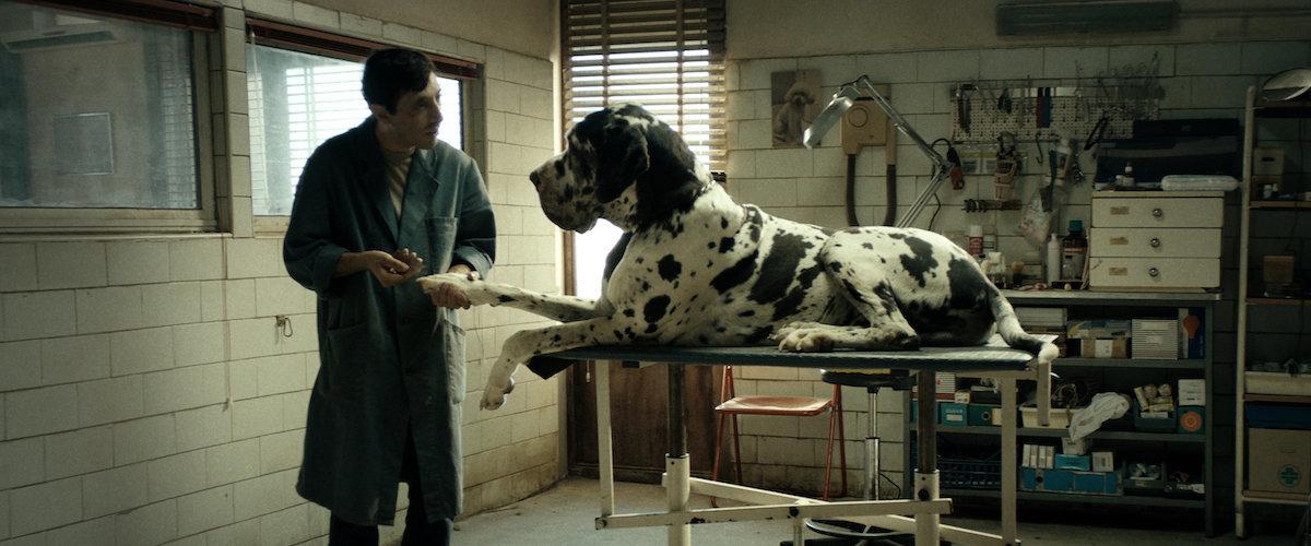Dogman movie review