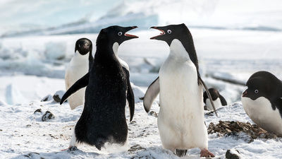 Homepage penguins image